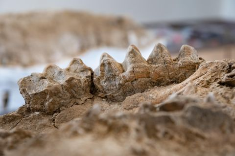 A Ranger Park in California discovered a petrified forest filled with fossils